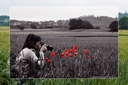 Red poppy in a wheat field with a growing photographer